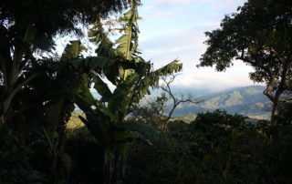 Photograph of shadowed trees looking over a hilly vista.